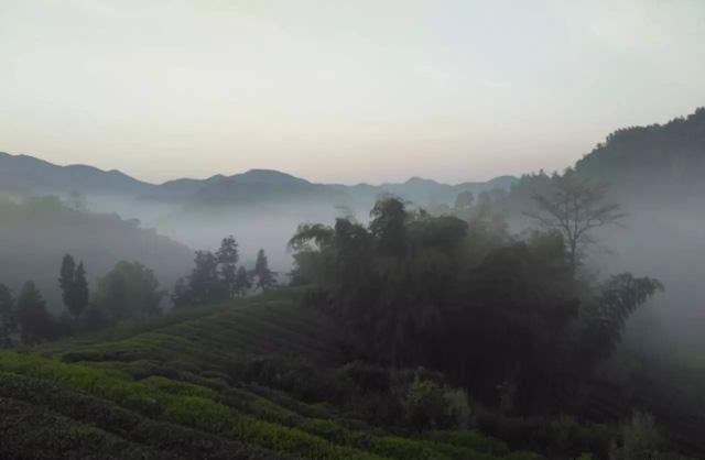 安顶山下,美丽的小山村,勤劳的采茶人
