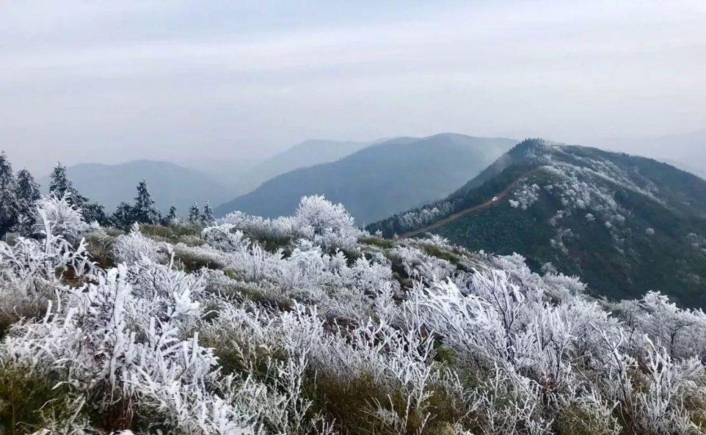安顶山雾松奇景