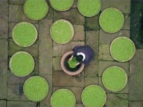 农业部向全球推荐:《中国茶-世界香》
